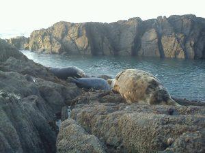 Morte Point Seals