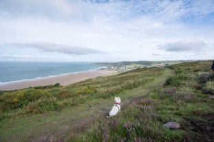 Poppy view over Woolacombe.jpg